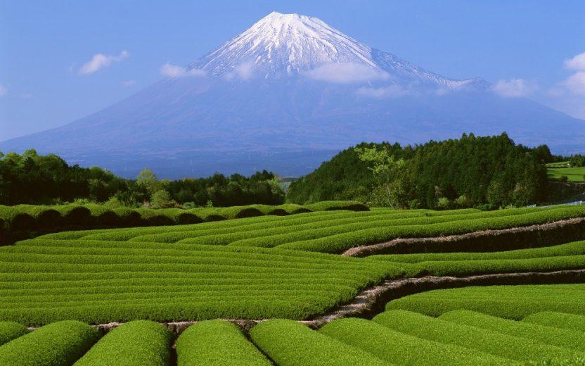 Vì sao nên lựa chọn du lịch Nhật Bản vào mùa hè?