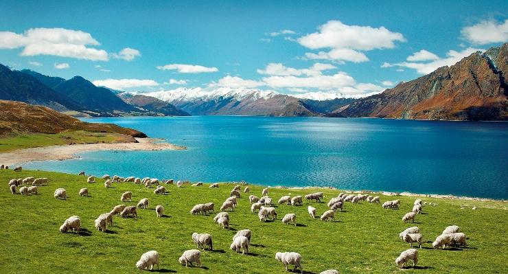 Thủ tục & Hồ sơ làm Visa New Zealand