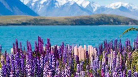 Thủ tục Visa thăm thân New Zealand