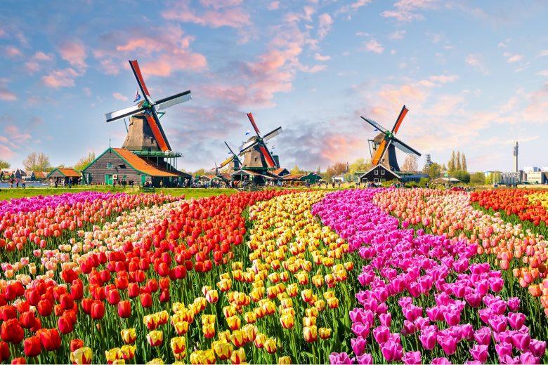 Những câu hỏi thường gặp khi phỏng vấn xin visa Hà Lan